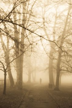 Haunted Trees  by jose5