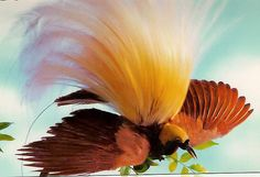 Did you know the bird of Paradise is the national bird of Papua New Guinea?