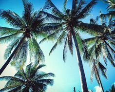Paradise.  #thailand #travel #aroundtheworld #palmtrees by gittawitzel