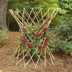 The Hourglass Peeled Willow Country Flower Plant Support is adjustable in width and can expand up to 48 inches wide. It is an excellent way to train climbing roses and vines. Inserts into the ground or a flower pot easily. Willow Flower, Flower Pots, Planting Vegetables, Growing Vegetables, Mandala Nature, Climbing Flowers, Plant Supports, Garden Nursery, Vegetable Garden Design