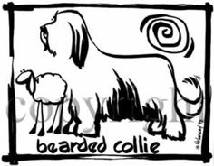 Bearded Collie Cavern Canine