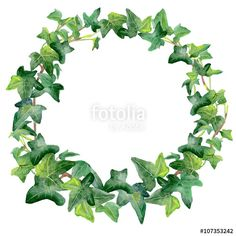 """Download the royalty-free photo """"Watercolor drawing of green ivy wreath isolated on white background. Hand drawn Araliaceae family plant. Bright colors design, realistic volume look. Greeting card design. Clip art. Add text"""" created by ariydesign at the lowest price on Fotolia.com. Browse our cheap image bank online to find the perfect stock photo for your marketing projects!"""