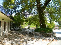 O platanos ton Pogoniani, Epirus, Greece Ghosts, Greece, Plants, Travel, Greece Country, Viajes, Destinations, Plant, Traveling