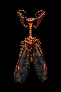 You've never seen insects look so magnificent before. Microsculpture: Portraits of Insects is a large coffee table book of mind-boggling photos of insects by Levon Biss, and published by Abra…