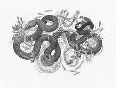 Zoe Kellercreates detailed illustrations pulled from the natural world. Her fauna-based drawings are done completely in charcoal, drawing the eye to the subtle markings used to create either fur or scales. Source imagery for the works comes from nature and how it becomes mediated in books and filed