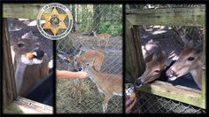 Officials are investigating after they say three deer were beaten to death at a Florida environmental education facility.