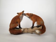 Needle felted fox - A Selection Of My Needle Felted Sculptures, Celebrating British Wildlife – Needle felted fox Needle Felted Animals, Felt Animals, Needle Felting Tutorials, British Wildlife, Wool Art, Kawaii, Animal Sculptures, Felt Toys, Wet Felting
