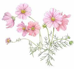Image result for cosmos flower tattoo