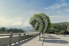 Regular trees shadows landscape under blue sky in Lidui park, Dujiangyan, China