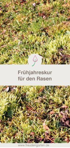 Den Rasen Im Frühjahr Richtig Pflegen
