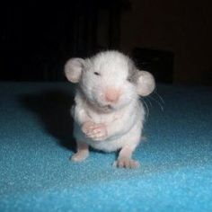 Baby mouse omg!!! Sooooooo tiny cutie!!!!                                                                                                                                                                                 More