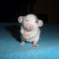 Baby mouse omg!!! Sooooooo tiny cutie!!!!