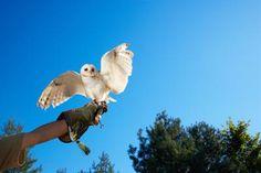 ¿Dónde puedo vender mis fotografías de fauna y paisaje? | eHow en Español