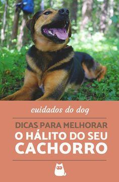 Se o cheiro bucal do seu dog está afetando a vossa relação, não hesite em usar essas dicas caseiras para melhorar o hálito do cachorro! #cachorros #dog #cuidados #pets #mundoanimal #animais #hálito