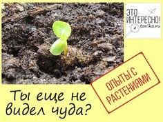 опыты с растениями - ускоренная съемка роста Plants, Flora, Plant, Planting
