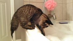 http://www.rougeframboise.com/maison/3-shampoings-animaux-faits-maison  #chat #chien #cat #dog #shampoing #shampoo #recette #recipe