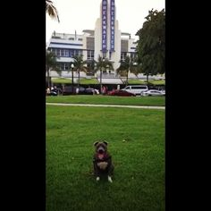 We're here #Miami!! #juniormillan