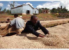 #Kenya #Coffee