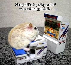 Even though that's really a hamster, it's still pretty great… (Gaming Mouse)