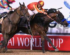 Secret Circle wins the Golden Shaheen during the Dubai World Cup Carnival March 28, 2015. Mathea Kelley/Dubai Racing Club, Meydan, Dubai UAE