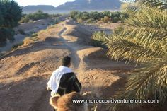 Camel rides in Morocco