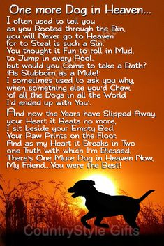 Pet Quotes Dog, Pet Loss Quotes, Animal Quotes, Losing A Dog Quotes, Dog Quotes Love, Love For Animals Quotes, Funny Pet Quotes, Best Dog Quotes, Phteven Dog