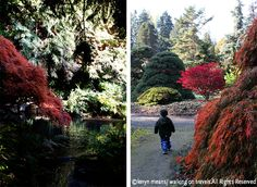 Seattle Garden Experience: 5 Favorites Show Off Their Autumn Wardrobe