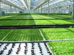 hydroponics | With a hydroponics kit and a greenhouse, you'll enjoy a multitude of ...