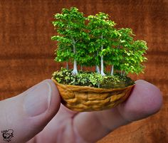 Walnut Forest by FauxHead photo manipulation a bonsai forest in a walnut shell