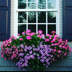 Solera Self Watering Window Box Planters - About Garden and Flowers Container Flowers, Flower Planters, Container Plants, Container Gardening, Window Box Flowers, Flower Boxes, Window Planter Boxes, Garden Windows, Self Watering