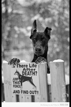 """ The sign is right! "" - Banger the Doberman"