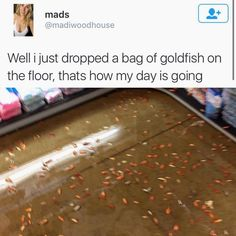 HELP THE POOR FISHIES DONT JUST STAND THERE< OH SHIT I THOUGHT THAT WAS TRE CRACKER GOLDFISH FOR A GOOD MINUTE HELL THOSE POOR GOD DAMN SOULS