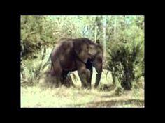 Gorongosa (Documentário português de 1961)