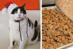 Gifts for Your Pets: Tuna Tidbits  Organic Homemade Treats