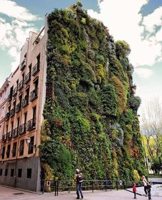 The great green wall by Patrick Blanc in Madrid, Spain. Caption this work for us. Follow: @TheStreetsOf_