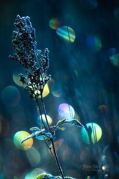 Joni Niemela Photography