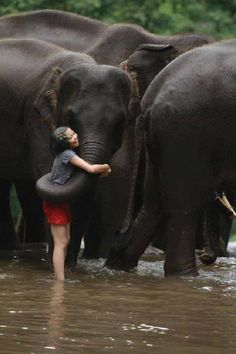 These are Indian elephants. The ears are much smaller than African elephants. Such a sweet show of affection.