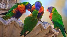 Super Cute Animal Photos For Your Monday Tropical Birds, Colorful Birds, Colorful Animals, Exotic Birds, Most Beautiful Birds, Bird Wallpaper, Computer Wallpaper, Cute Animal Photos, Bird Pictures