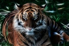 Tiger fractals by BDStudio.deviantart.com