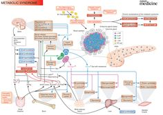 Metabolic Syndrome - Pancreas