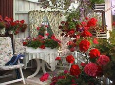 pots of geraniums on the tables