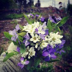 I miss yesterday's summerbreeze. Just a little walk in the surroundings. #onebouquetperday #kukkakimppu #bouquetdefleurs #flor #fiori #flower #fleur #blommor #blumen @onebouquetperday