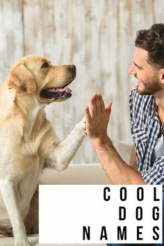 Cool Dog Names - 300 Awesome Puppy Name Ideas Best Dog Names, Puppy Names, Cool Dog Names, Best Dogs, Fun Facts About Dogs, Dog Facts, Cute Labrador Puppies, Guide Dog, Dog Quotes