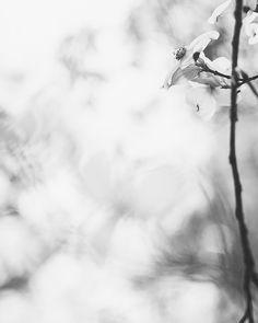 Spring rain... . . . . #rainydays #dogwood #chasinglight #justgoshoot #acertainslantoflight #makemoments #toldwithexposure #acolorstory #vsco #vscocam #nothingisordinary #visualsoflife#openmyworld #ourplanetdaily #moodygrams #agameoftones #exkart  #exploremore #mextures  #artofvisuals #minimalmood #minimalove #minimal_perfection #minimalhunter #minimalismo #minimal_graphy #bnw_life #bnw_society #bnw_planet #bnw_soul
