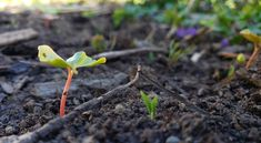 Regenerative agriculture restores the planet instead of depleting it