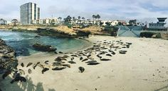 On our way back to Los Angeles we continued our trip along the coast.. another one of my personal highlights of this trip was La Jolla Cove near San Diego.. There were a lot of Sea Lions 😍 and Seals 😍 there and sometimes you could get so close, you coul