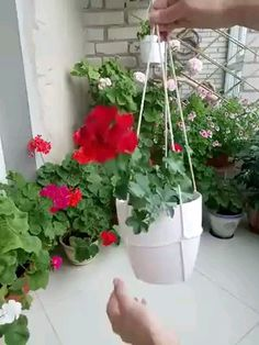 Twine uses for plants | Gardening | plants | hang plants | hanging plants | Gardening tips | planters world | hobbies | greening | landscaping | DIY projects | diy