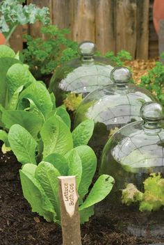 Grow a productive shade garden with the right plants and a few tricks