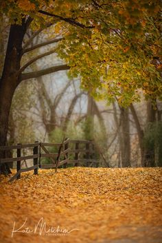 Digital background of fall country scene Studio Background Images, Dslr Background Images, Photo Background Images, Background Images Wallpapers, Picsart Background, Landscape Background, Background For Photography, Photo Backgrounds, Editing Background