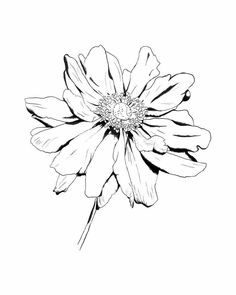 Image detail for -flower drawing by ~kingROWENA on. Image detail for -flower drawing by ~kingROWENA on deviantART. Flower Line Drawings, Flower Sketches, Pencil Drawings, Drawing Flowers, Tattoo Flowers, Realistic Flower Drawing, Colour Drawing, Pencil Art, Tattoo Sketches